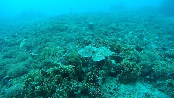 duiken-gili-air