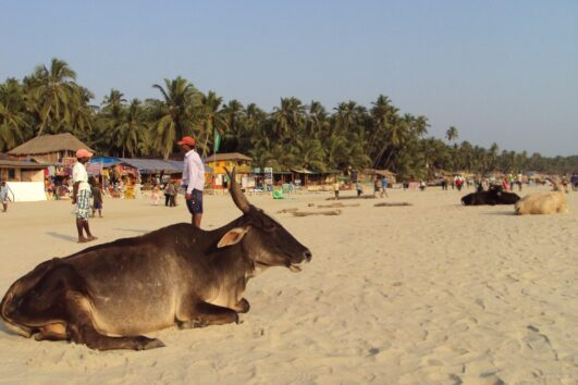 Goa - Palolem beach