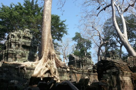 Jungle Tempel bij Angkor