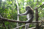 Jungle trekking en schattige aapjes