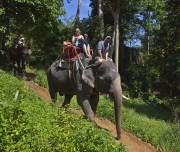 Olifanten Khao Sok
