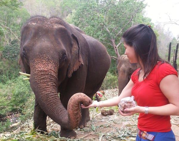 olifanten chiang mai