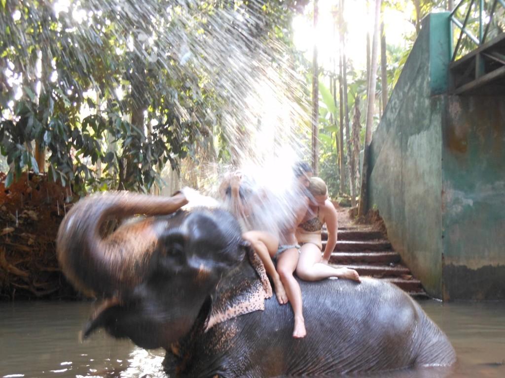 Olifanten Ponda - Goa
