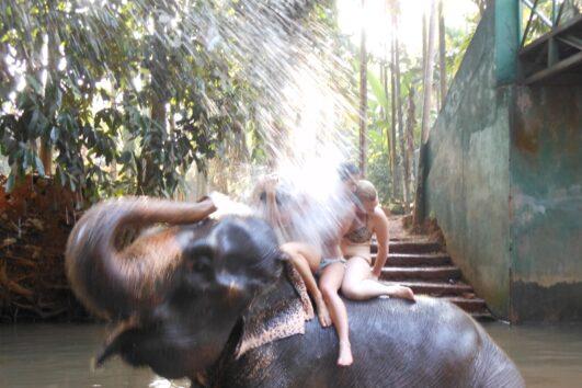 Ponda olifanten goa
