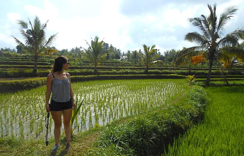 Tour Tetebatu rijstvelden