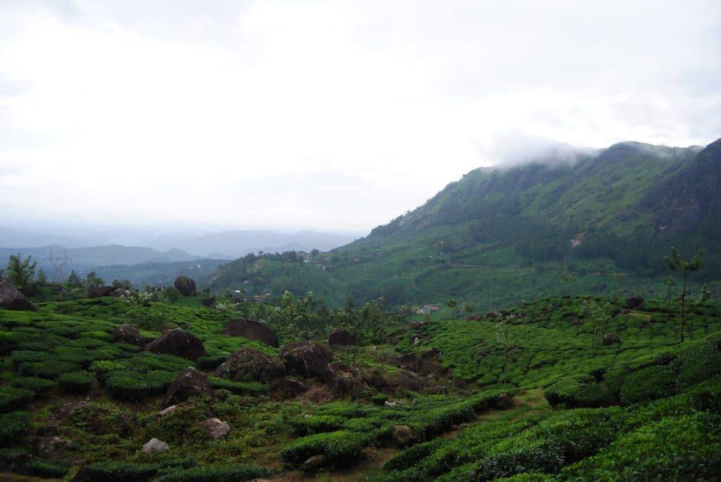 Landschap Munnar