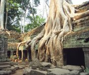 Jungle temple Angkor