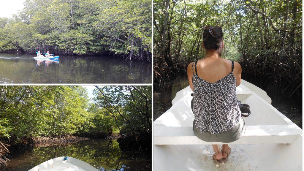 bootje door mangrove bos