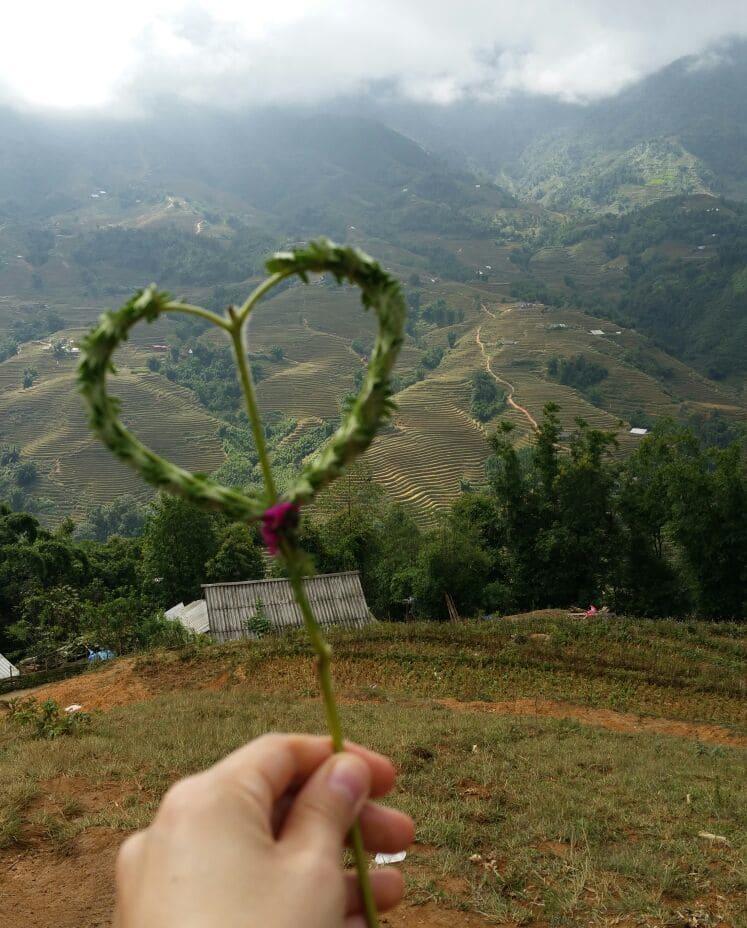 Sapa trekking rijstvelden