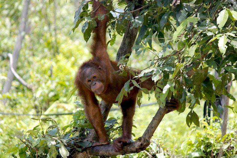 sumatra java bali reis