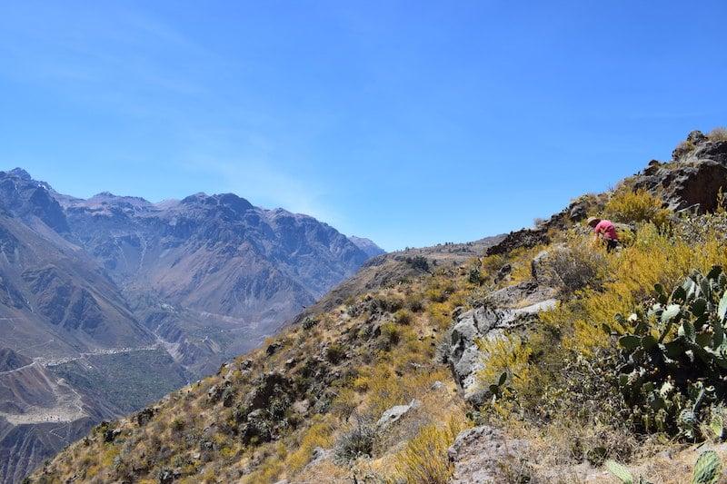Hoogtepunt Colca Canyon Peru