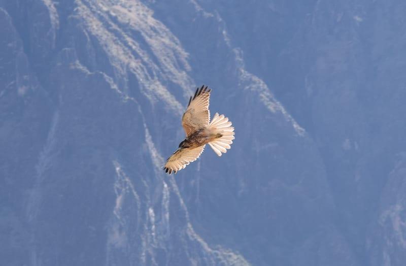 Valk Cruz del Condor
