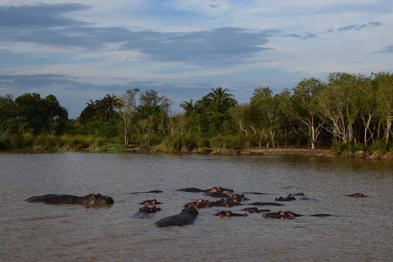 Nijlpaarden St. Lucia