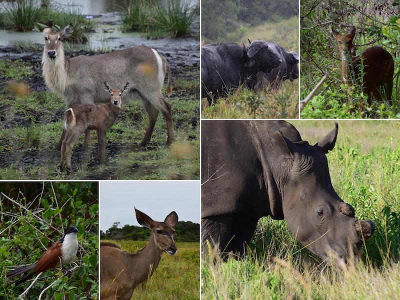 Wildlife iSimangaliso wetland park st. lucia