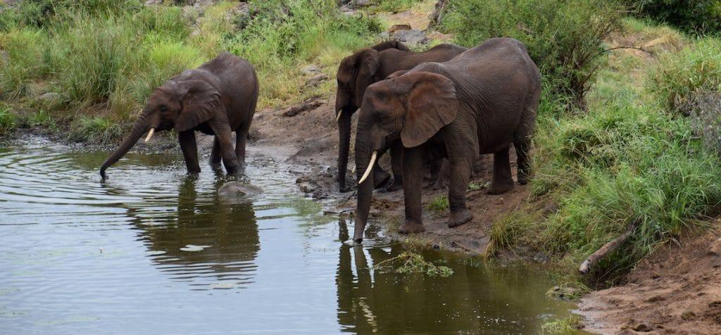 Krugerpark route tips