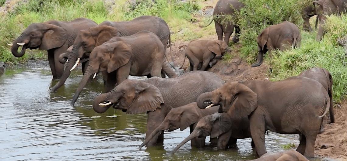 Krugerpark bezoeken tips