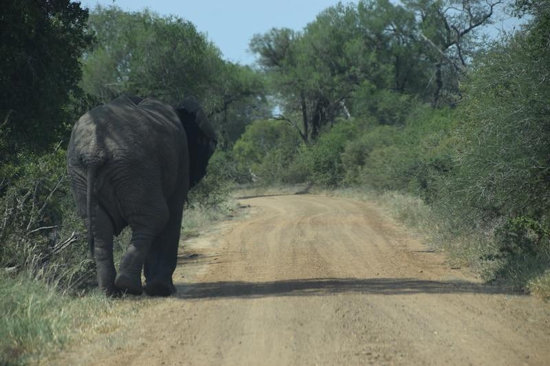 Onverharde weg Krugerpark