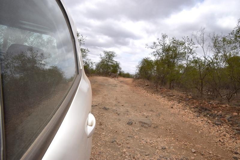 SUV Zuid Afrika