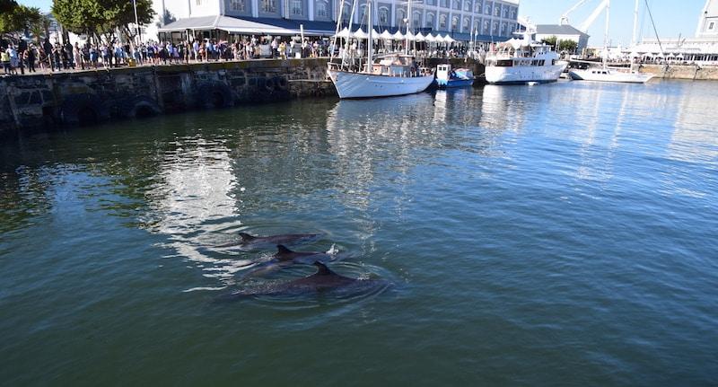 Walvissen Kaapstad