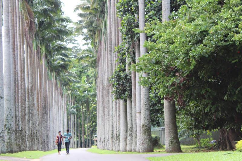 Botanische tuinen Kandy