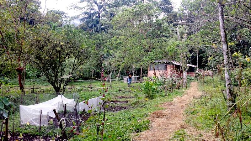 Costa rica boerderij