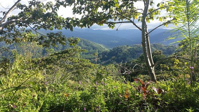 Omgeving Costa Rica
