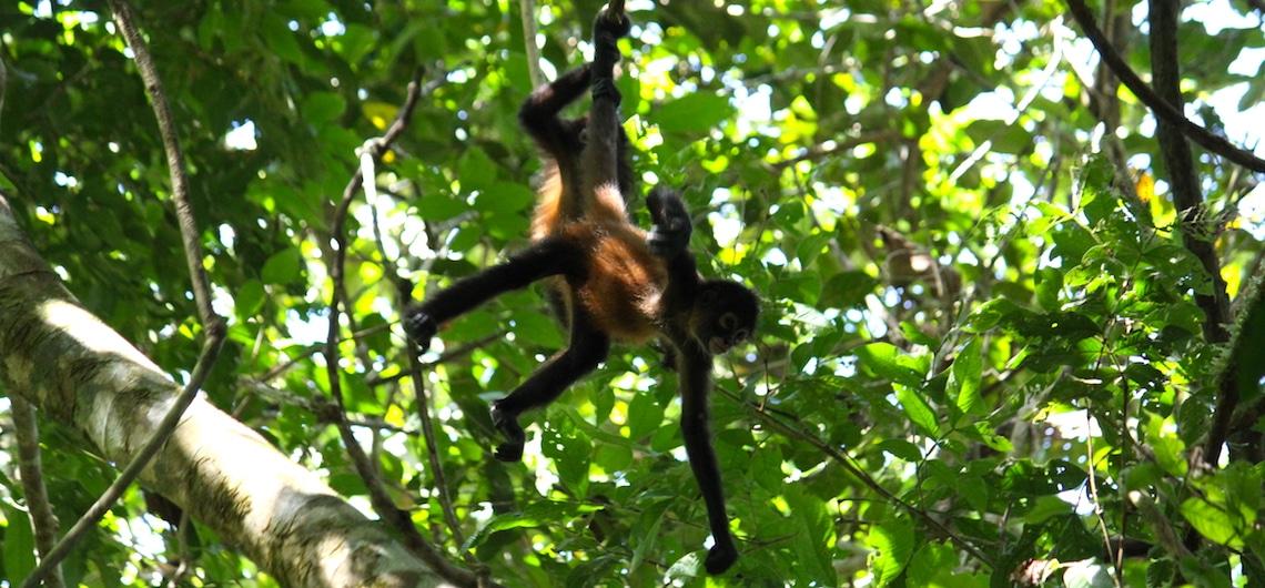 Corcovado National Park Costa Rica bezoeken