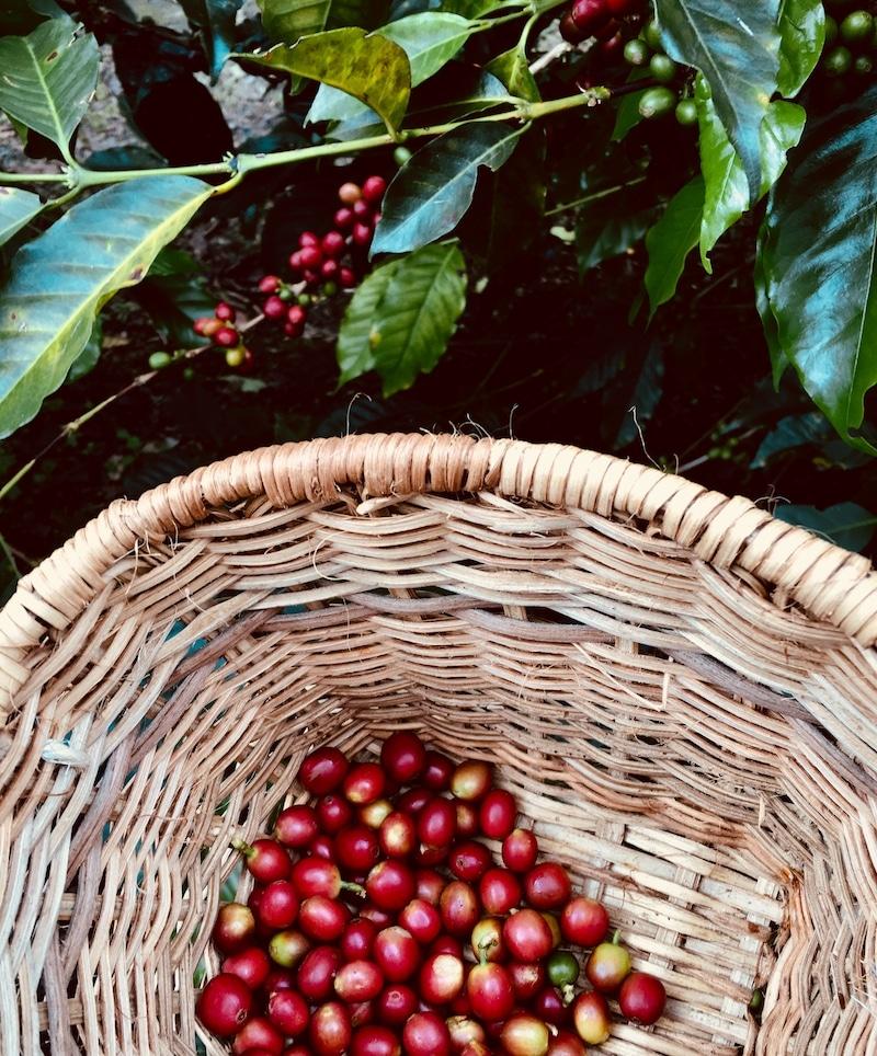 Koffietour Colombia Salento