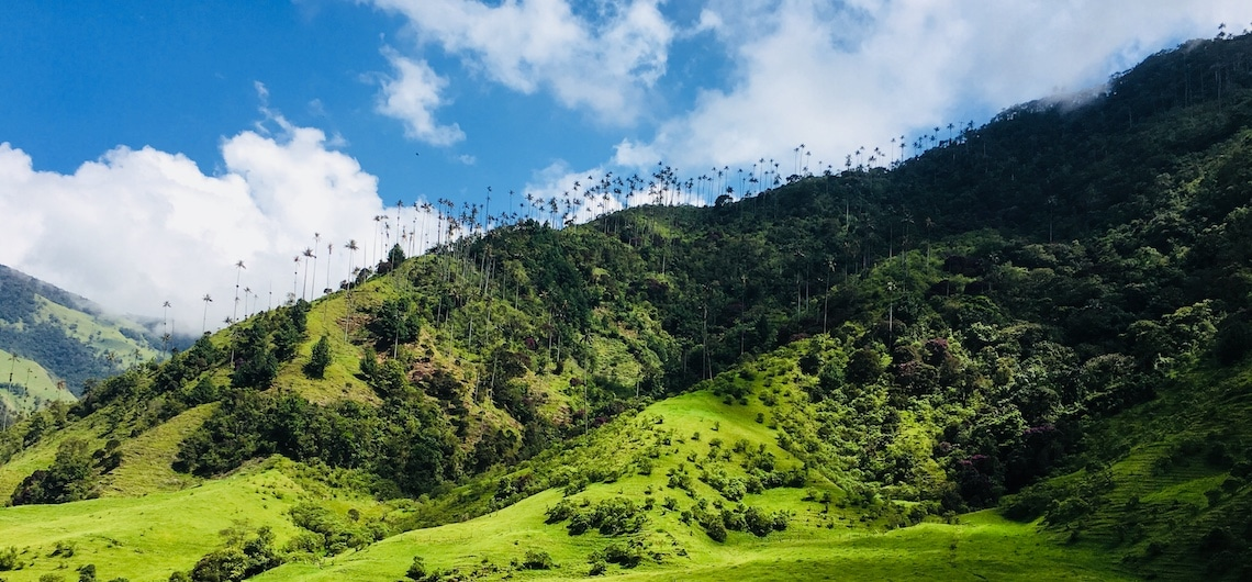 Valle de Cocora bezoeken Colombia