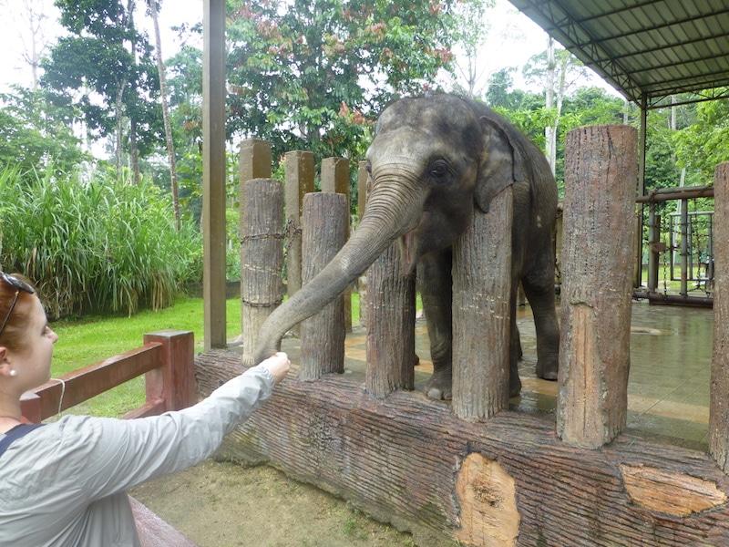 Olifanten maleisie