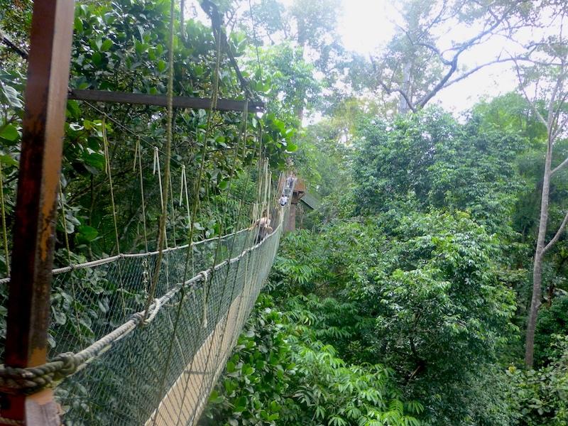 Taman Negara regenwoud
