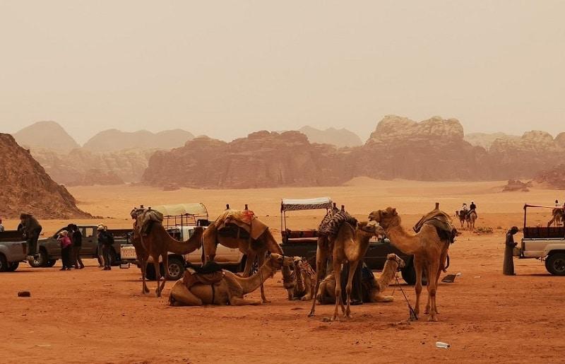 kameel of jeepsafari wadi rum jordanie