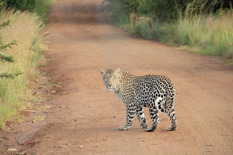 Doen in Sri Lanka Wildlife
