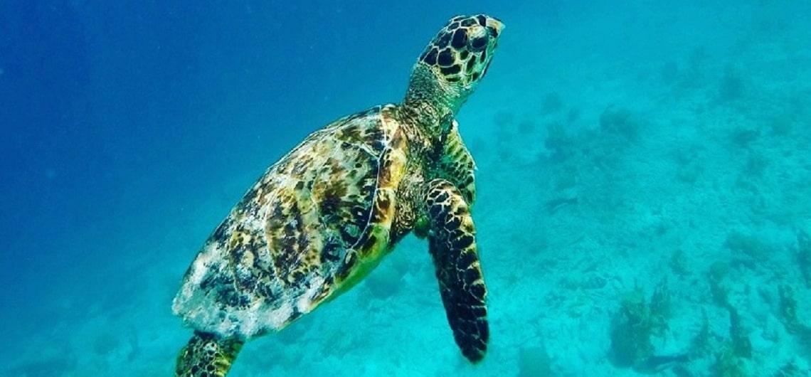 Snorkelen schildpadden Curacao