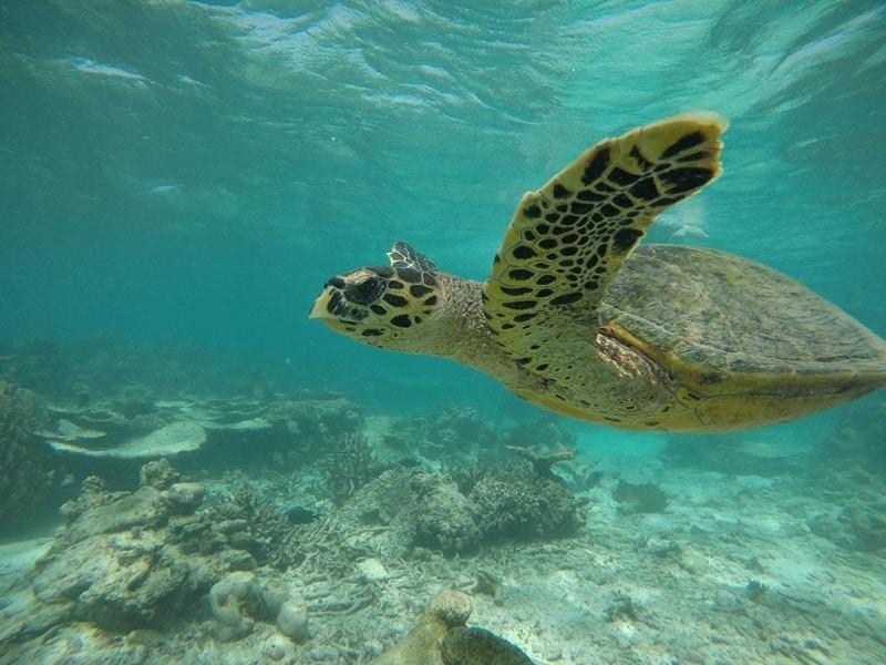 Malediven goedkoop snorkelen activiteiten schilpad