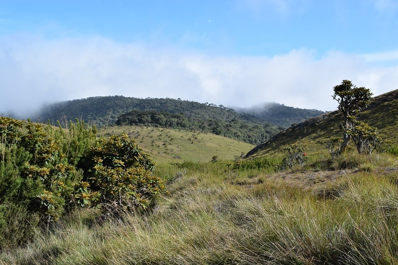 Horton plain national park hike