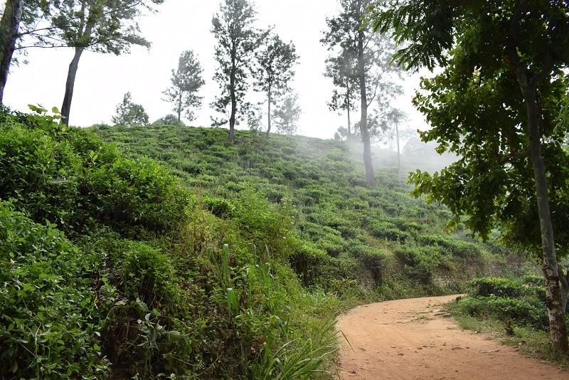 Little Adam's Peak Ella Rock Theeplantages Sri Lanka