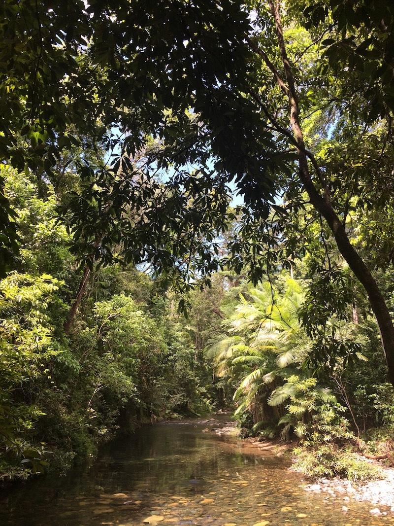 Australië tropisch regenwoud