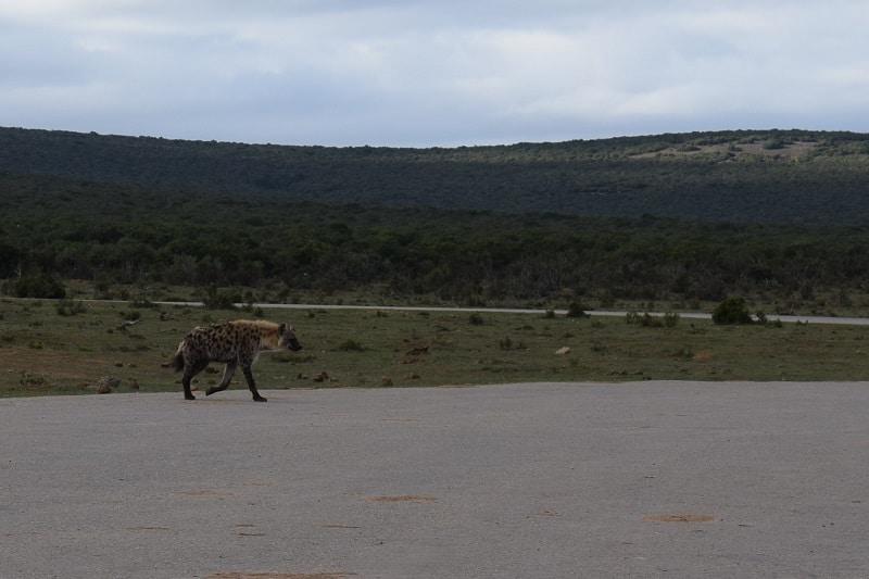 Wild life Zuid Afrika Addo tips
