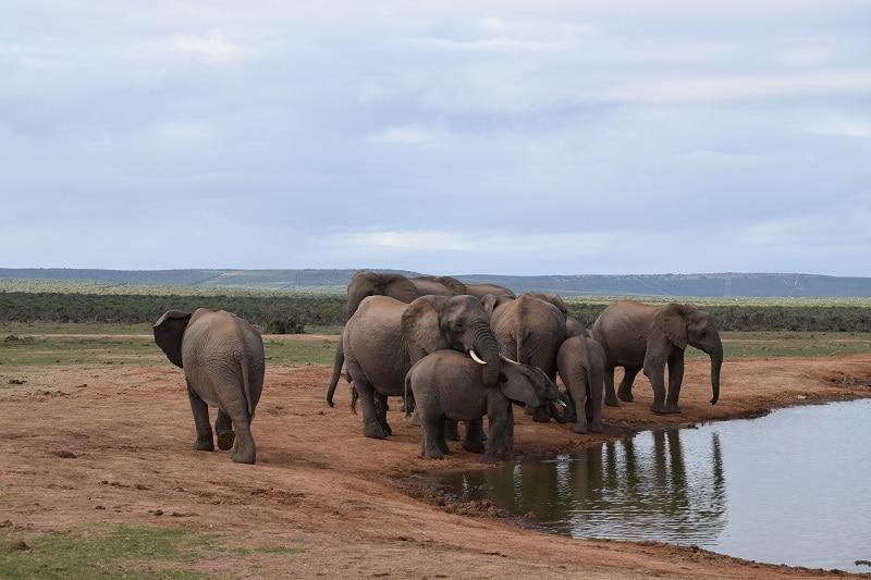Olifanten Addo elephant park tips