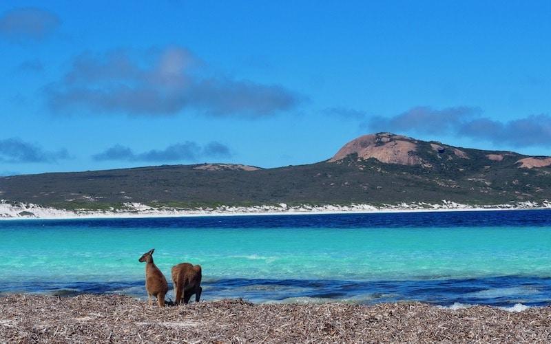 Australië mooiste kust met dieren