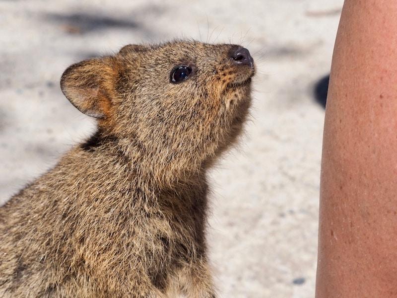 Australië unieke dieren