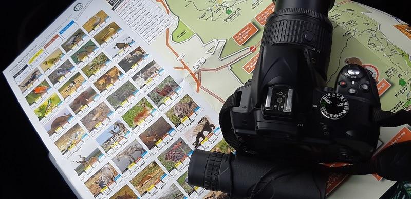 wild life dieren spotten addo elephant park