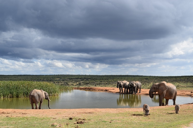 Tips wild life spotten Addo National park