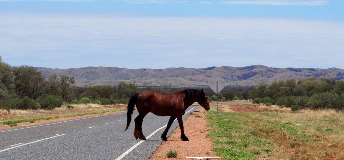 hoogtepunten Australië en bezienswaardigheden