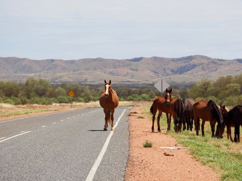 Australië bijzonder wildlife