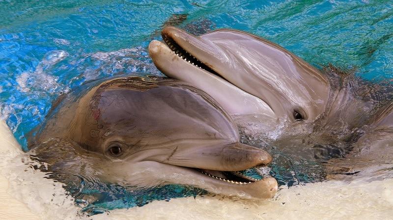 dolfijnen miami beach