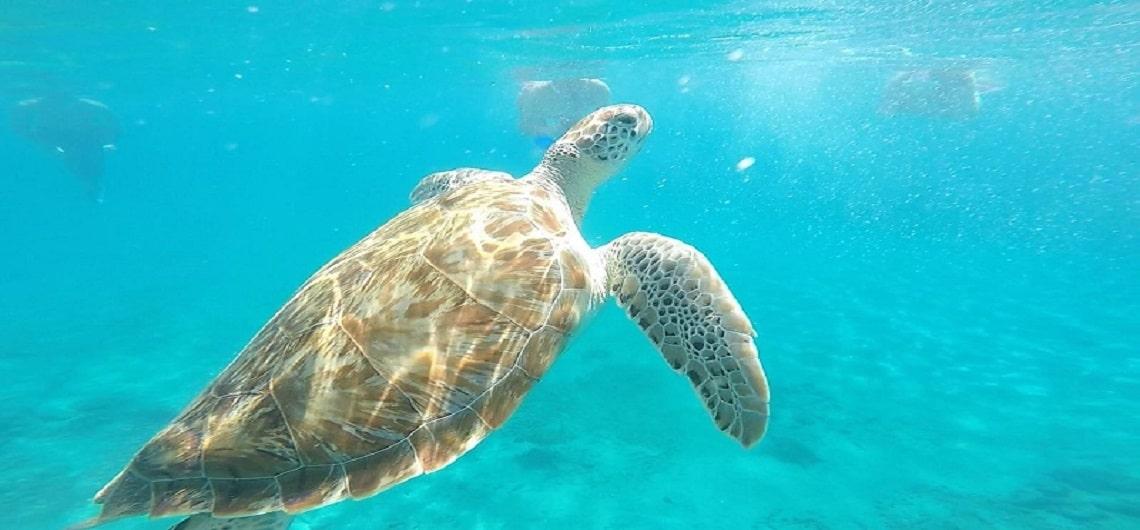Bonaire snorkelen schildpadden