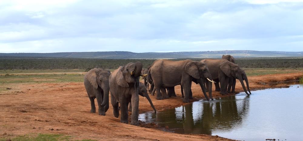 Addo elephant park bezoeken tips