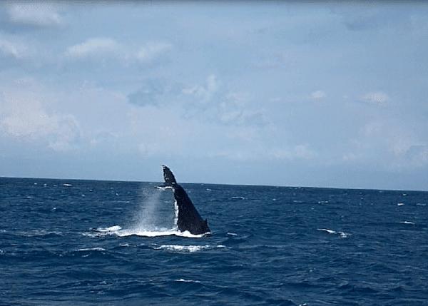 Hervey Bay walvissen tour australie